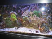 Meerwasseraquarium - Nanoriff - 54