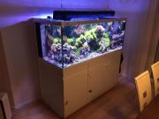 Meerwasseraquarium Red Sea