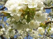 Obstbaumwiese am Michaelsberg