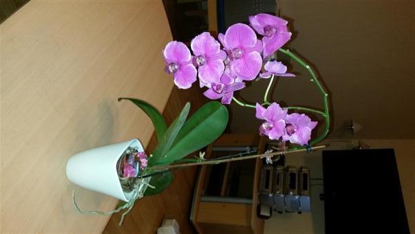 orchideen sammlung zu verkaufen in m nchen pflanzen. Black Bedroom Furniture Sets. Home Design Ideas
