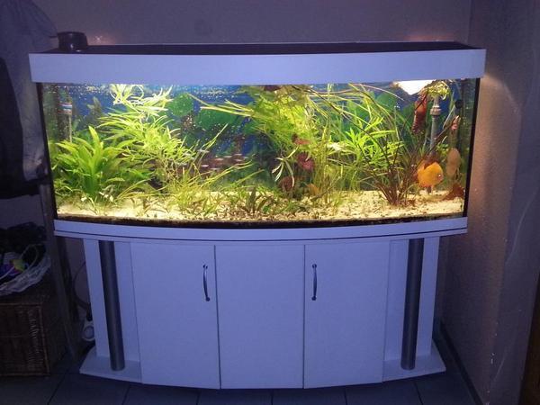 panorama aquarium 160x60x50 40cm in b hl iggelheim. Black Bedroom Furniture Sets. Home Design Ideas
