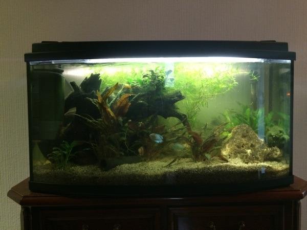 Panorama aquarium neu und gebraucht kaufen bei for Aquarium gebraucht