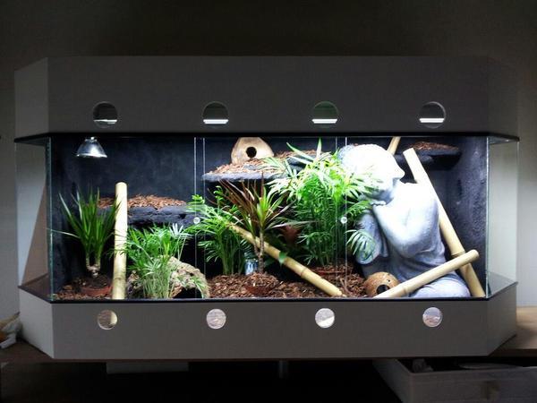 panorama terrarium im asia stil in t nisvorst reptilien. Black Bedroom Furniture Sets. Home Design Ideas