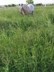 Pferd als Reitbeteiligung