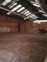 Pferde Box frei