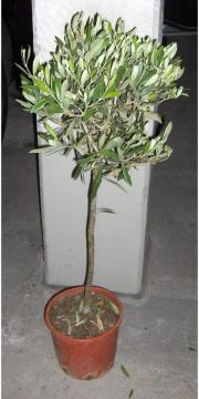 Pflanzen für Terrasse -