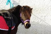 Ponyschule für Kinder