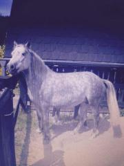 Ponystute