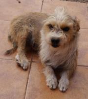 Ramona, tolles Hundemädchen