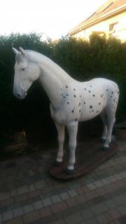 Schimmel, Pferd -