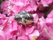 Schöne Griechische Landschildkrötenbabys