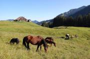 Schöne Pferdeweide auf