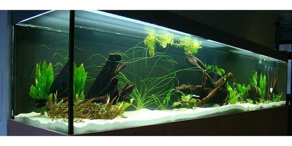 Suche aquarium fische zu verschenken in m nchen for Fische aquarium