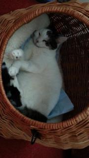 Suche liebe Katze