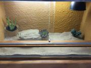 Terrarium aus Holz