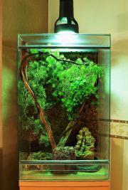Terrarium plus Inkubator