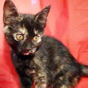 Tierschutz] - Katzenmädchen Lura