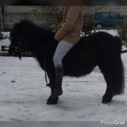 Verkaufe tolle Pony