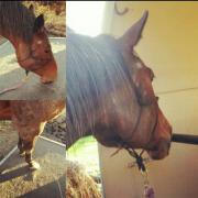 Verladetraining, Vertrauenstraining, Pferd