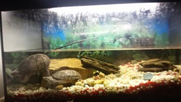 aquarium schildkr ten kleinanzeigen tiermarkt deine. Black Bedroom Furniture Sets. Home Design Ideas