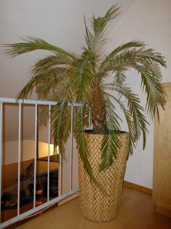 pflanzen garten familie haus garten erlangen. Black Bedroom Furniture Sets. Home Design Ideas
