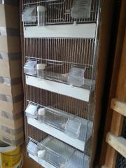 zuchtboxen für kanarienvogel