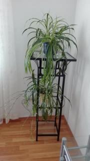 Zwei Zimmerpflanzen mit