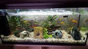 100x40x50 cm Aquarium