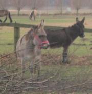 2 brave Esel (