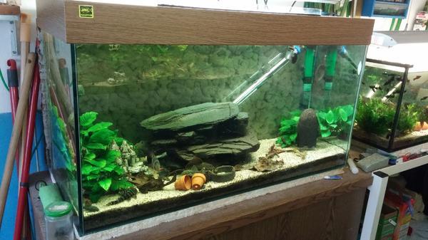 aquarium 100x50x40 kleinanzeigen kaufen verkaufen bei deinetierwelt. Black Bedroom Furniture Sets. Home Design Ideas