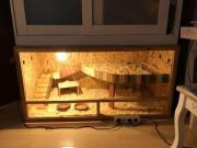Afrikanischer Weißbauchigel + Terrarium &