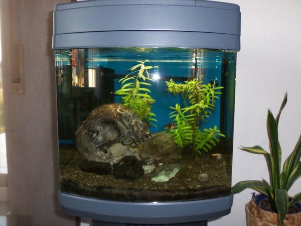 Gebogene frontscheibe kleinanzeigen kaufen verkaufen bei for Aquarium gebraucht