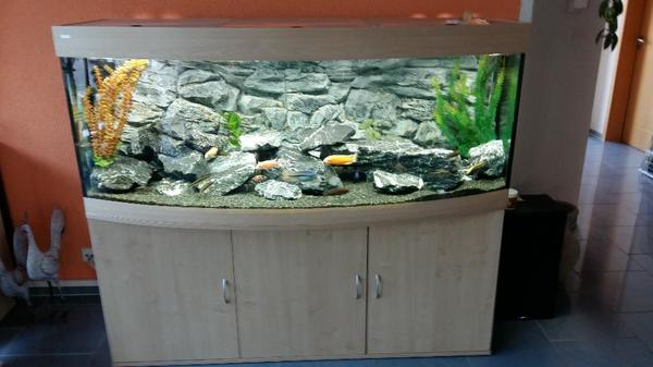 aquarium panoramascheibe kleinanzeigen aquaristik. Black Bedroom Furniture Sets. Home Design Ideas