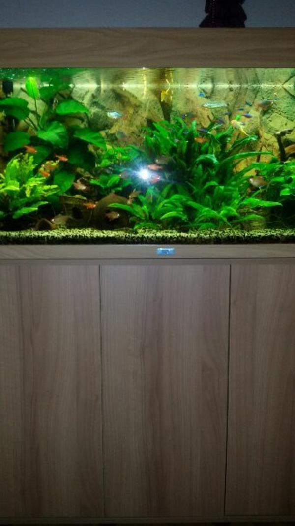 Innenfilter aquarium kleinanzeigen kaufen verkaufen bei for Aquarium innenfilter