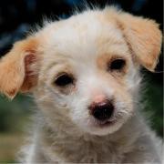 Bayda, Hundeglück auf