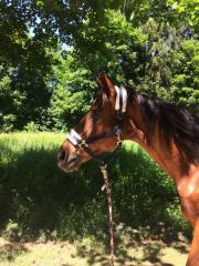 Beistellpferd sucht ein