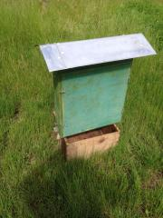 Bienenschaukasten DN Maß