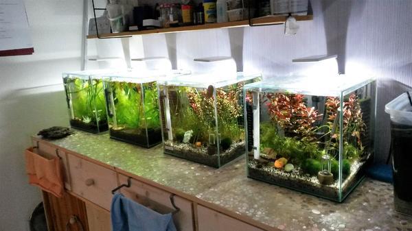 aquarien verkauf kaufen aquarien verkauf gebraucht. Black Bedroom Furniture Sets. Home Design Ideas