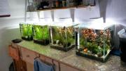 Biete Garnelen Aquarium