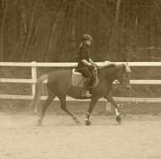 Braves Reitbeteiligungs-Pferd