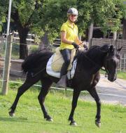 Endmass Pony Stute -