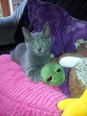 Excellente Kitten