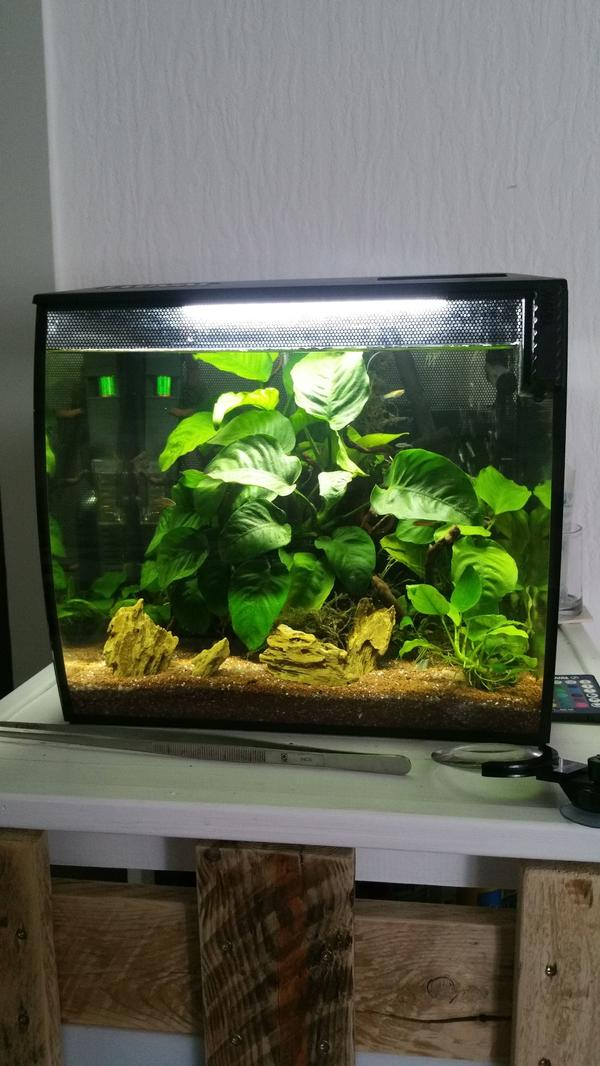nano aquarium zubehor gebraucht kaufen nur 2 st bis 70. Black Bedroom Furniture Sets. Home Design Ideas