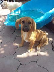 Gina, 4 Monate