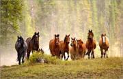 Gnadenbrotplatz für Pferd -