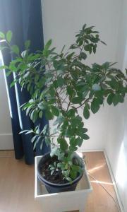 pflegeleichte zimmerpflanzen pflanzen garten g nstige angebote. Black Bedroom Furniture Sets. Home Design Ideas