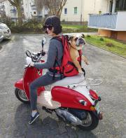 Hunde mit ca.