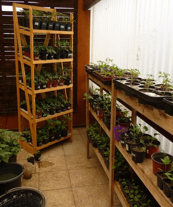 sonnenblumen pflanzen gebraucht kaufen nur 2 st bis 75 g nstiger. Black Bedroom Furniture Sets. Home Design Ideas
