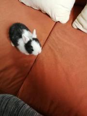 Kaninchenbaby.