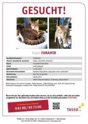 Katze / Kater Faramir